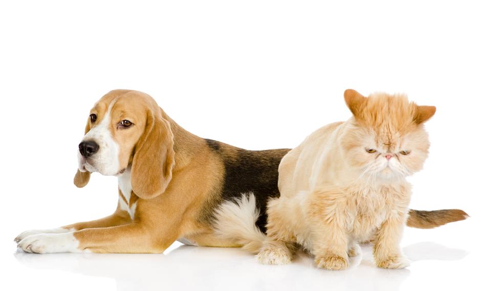 ¿Existe armonía entre perros y gatos?