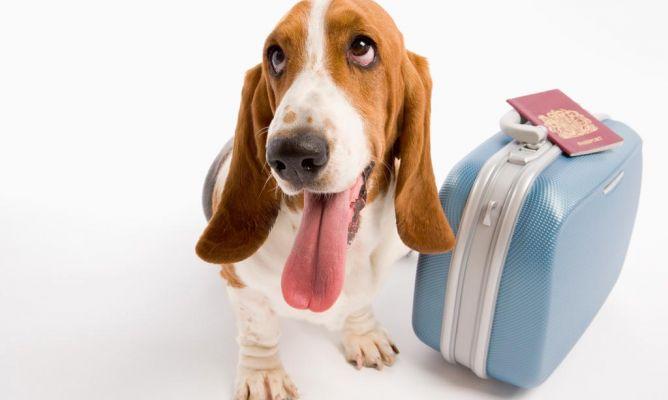 ¿Cuál es la forma ideal de movilizarse cuando se viaja con mascotas?