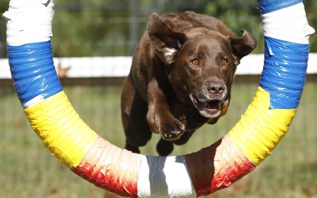 Tendencias actuales de deporte con mascotas: Canicross, agility, mushing, etc.
